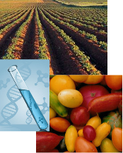 genetically modified crops,genetically modified organism,gmo foods,farming,pesticides,herbicides,science,research,gene splicing,fruits,vegetables,monsanto,food industry,healthy eating,genetic engineering,